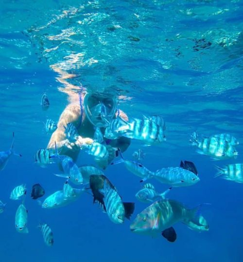 The girl in the mask under the water feeds the hands of predatory fish of the coral reef of the Red Sea