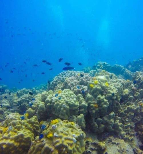 Young coral reef formation on sandy sea bottom. Deep blue sea pe